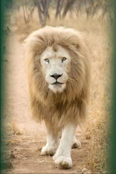 lion king original name