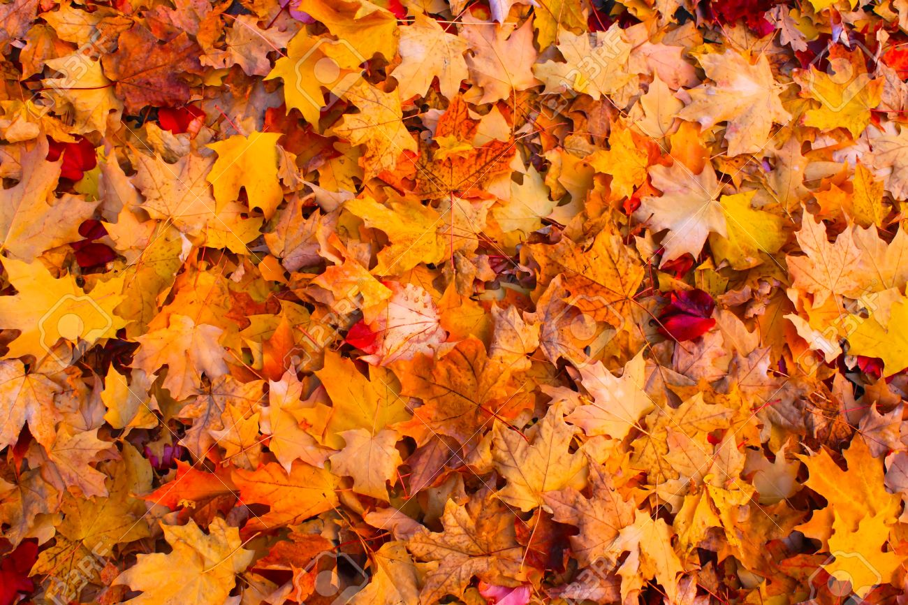 Autumn Leaves Falling Hd Wallpaper Leaf Collection Schedule Announced Whiz News