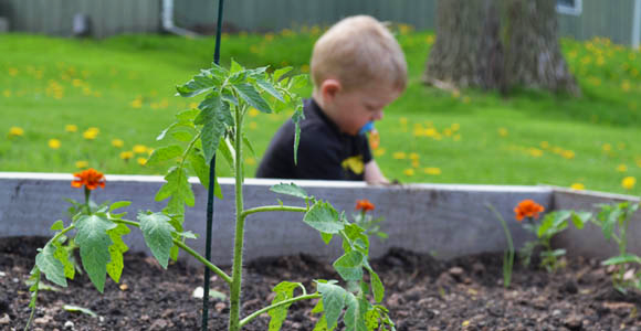 Expert Backyard Gardening Advice