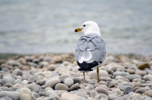 Pocketing one of these rocks will cost you $250. The snobby seagull, on the other hand, is free.