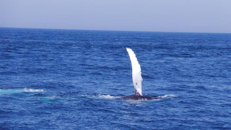 cape cod whales