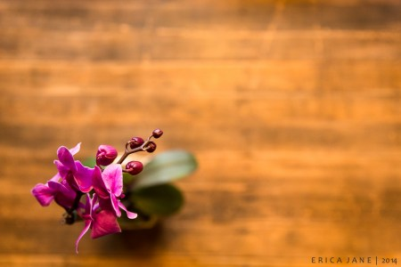 Erica Jane | Orchid
