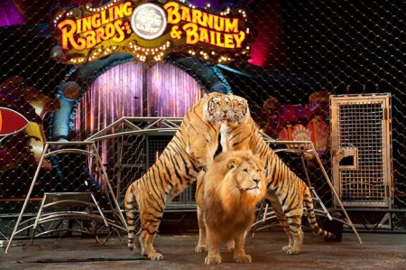 Ringling-Bros-Barnum-Bailey-Circus-presents-DRAGONS