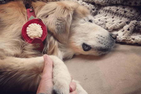 """Rescued, and living my life helping others smile. In the last part of my journey as cancer is taking over,"" reads Smiley's Instagram bio. (smileytheblindtherapydog/Instagram)"
