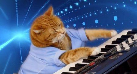bento-keyboard-cat-i_i