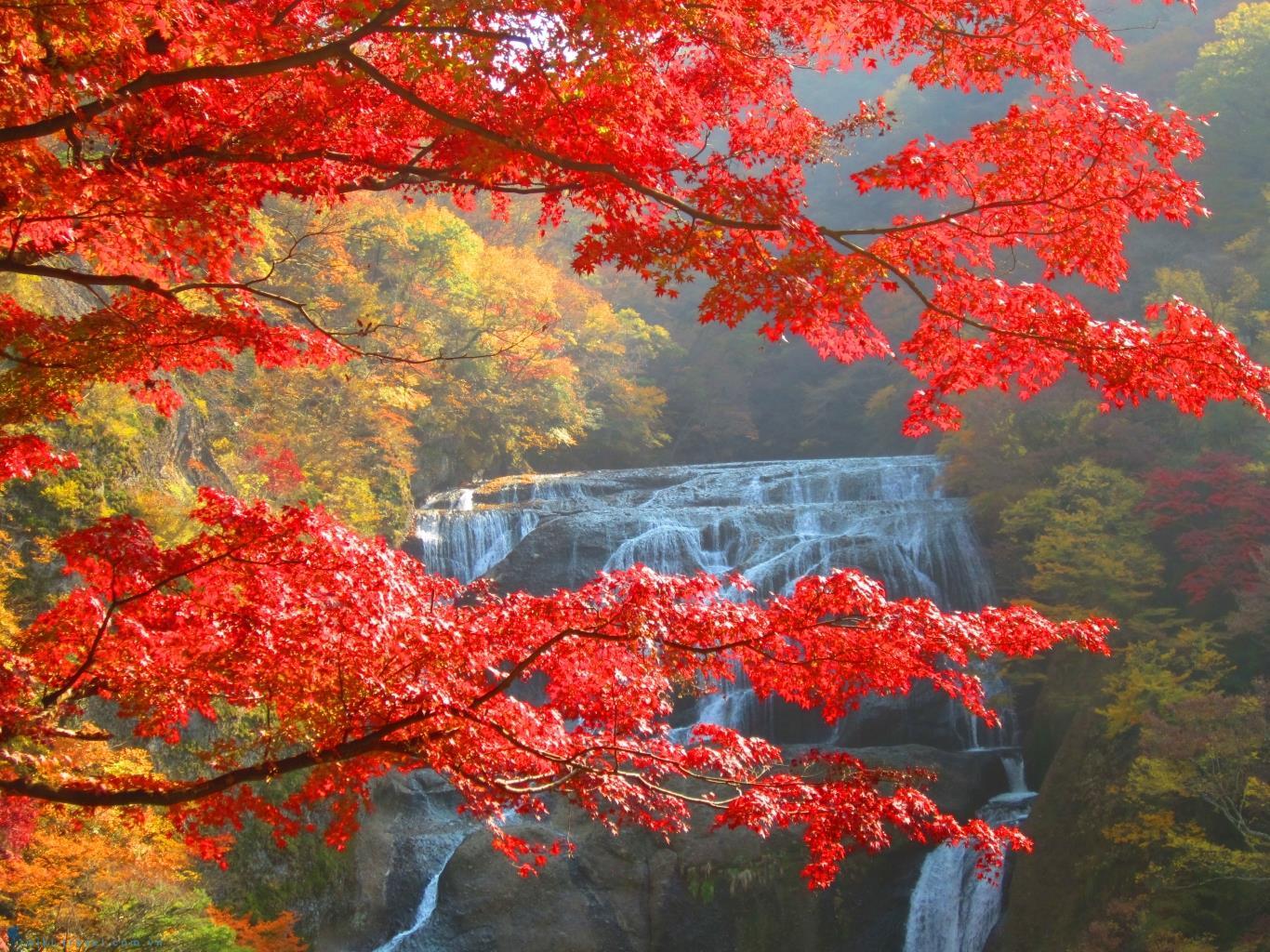 Scenery Wallpaper Fall Ho 224 I Niệm M 249 A L 225 đỏ Nơi Xứ Sở Hoa Anh đ 224 O