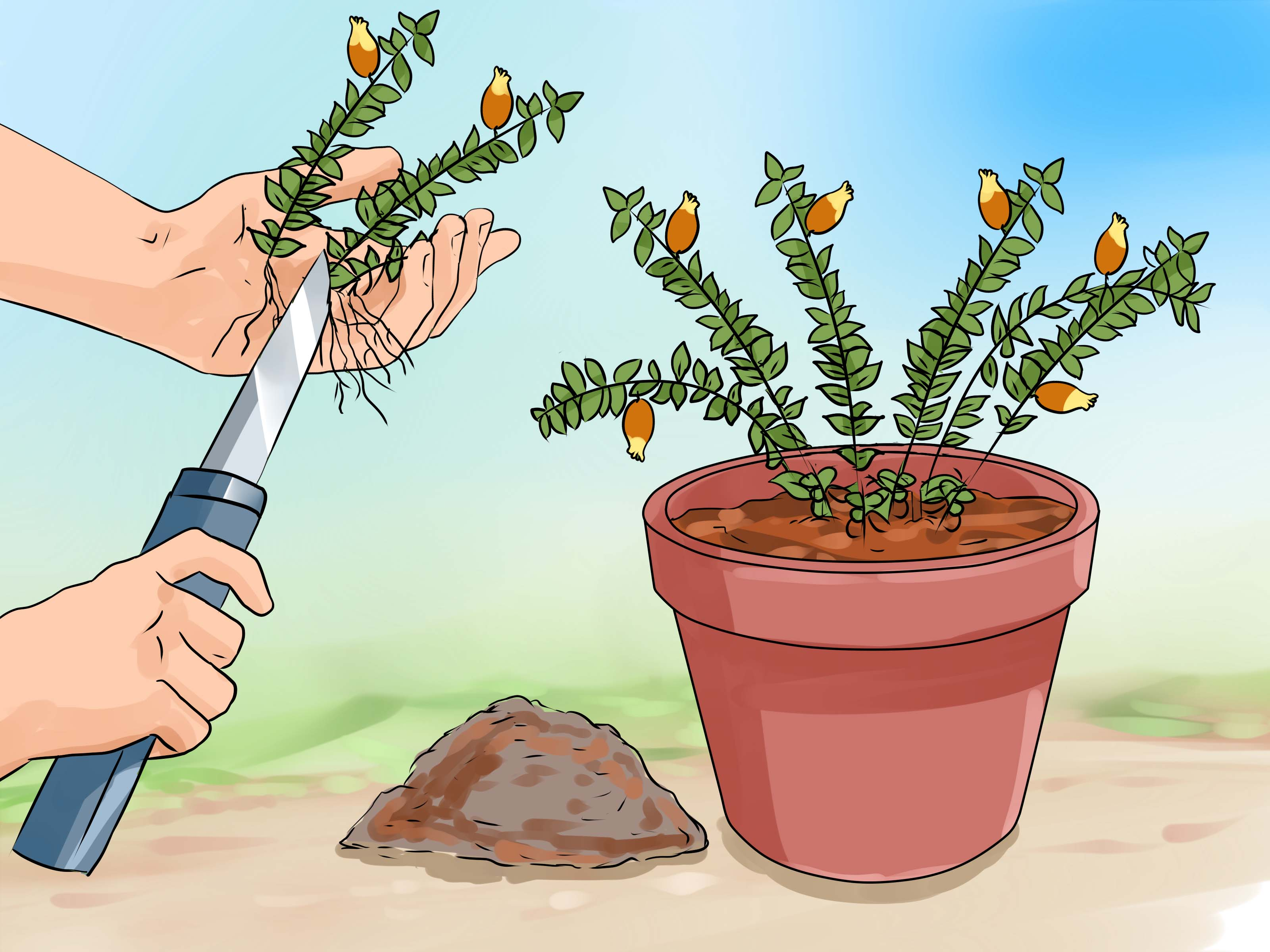 Easy To Care For Houseplants How To Care For A Goldfish Plant 6 Steps With Pictures