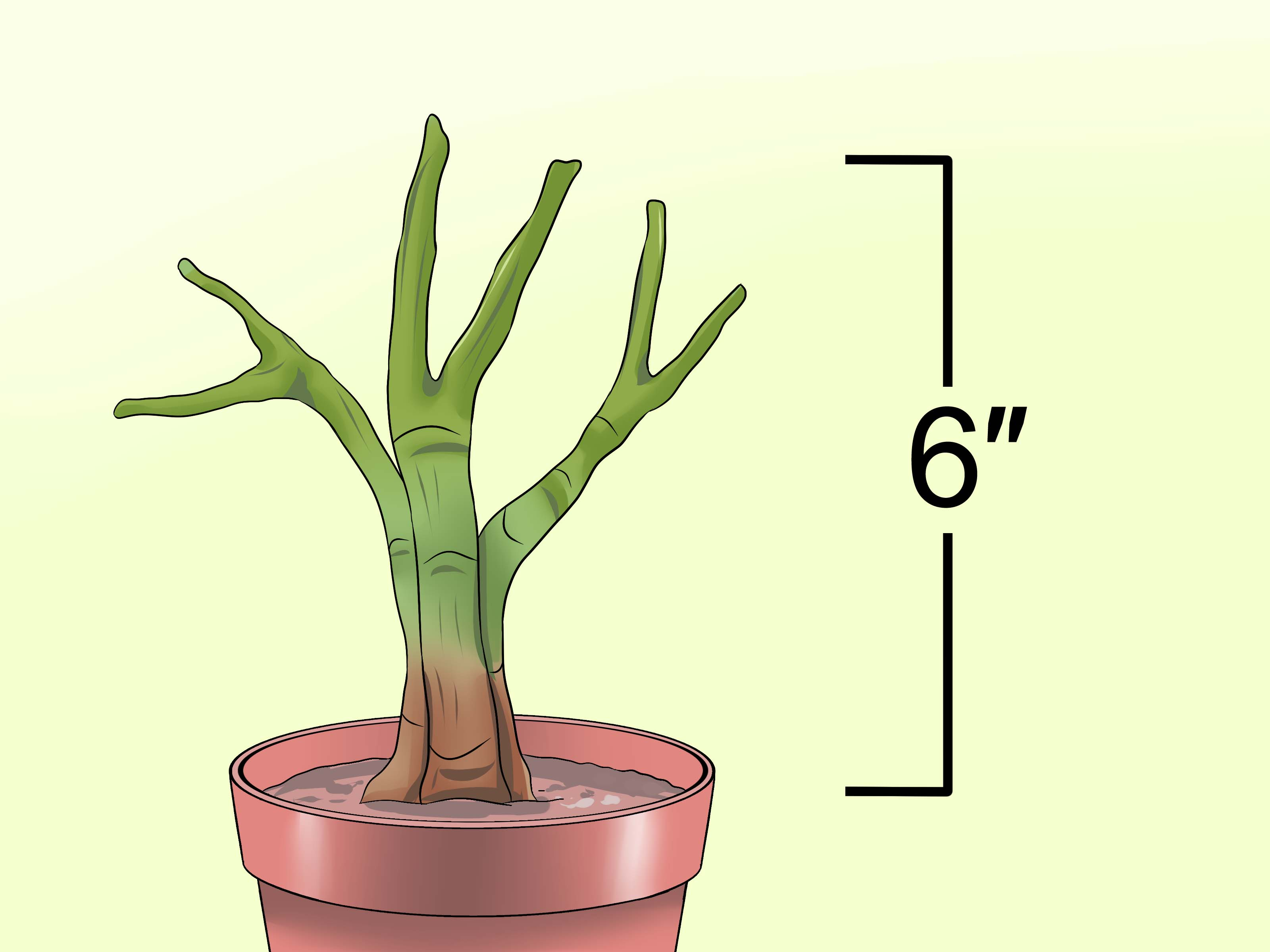 Dracaena Snoeien How To Prune A Schefflera Plant 7 Steps With Pictures Wikihow
