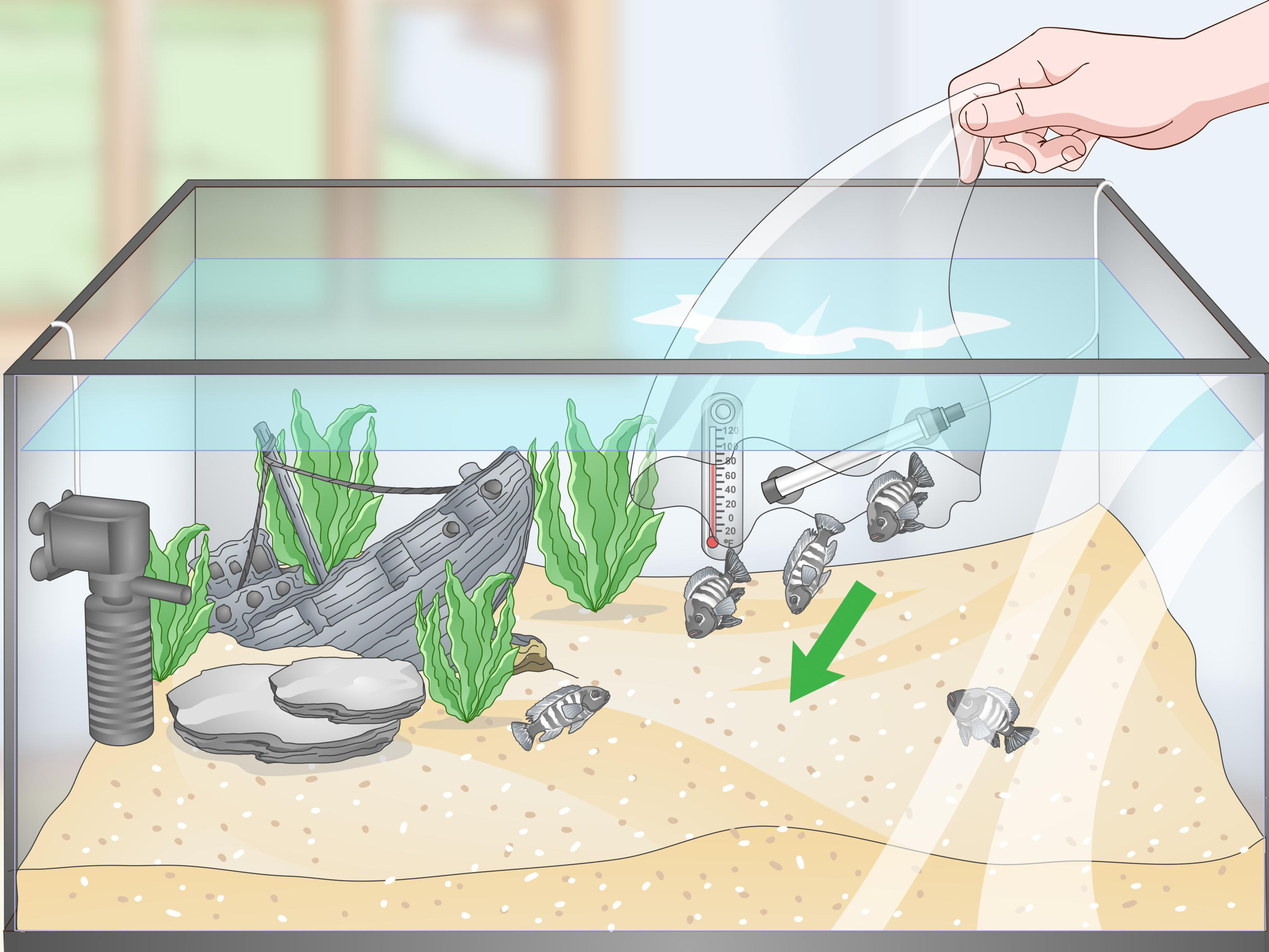 How To Set Up A Tropical Freshwater Aquarium With Pictures