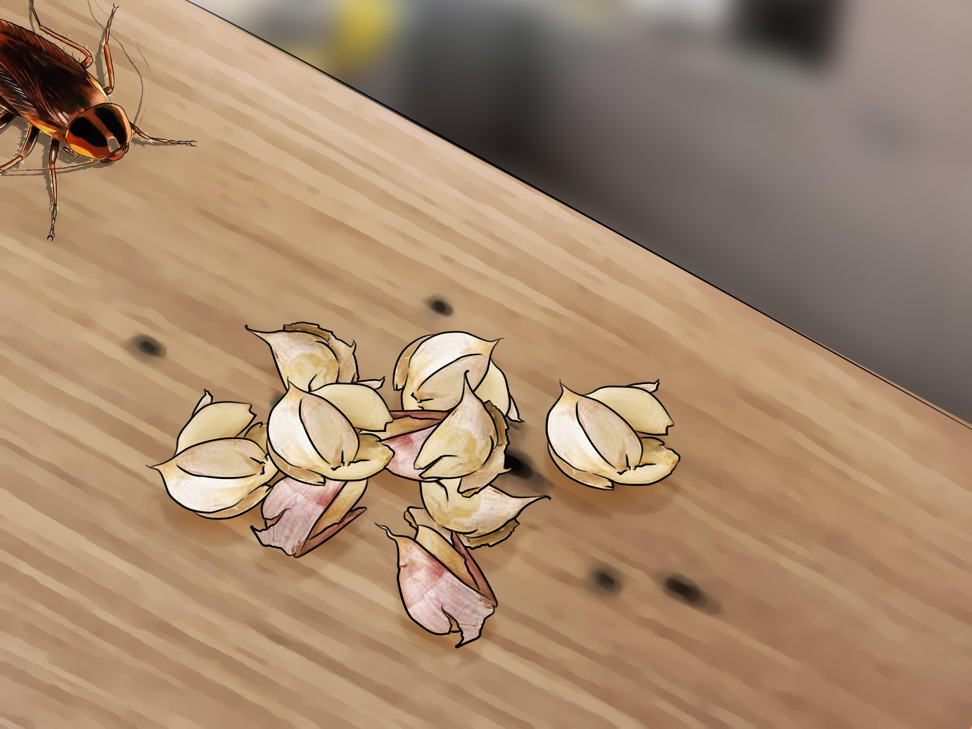 acide borique contre les cafards | acide borique contre les insectes