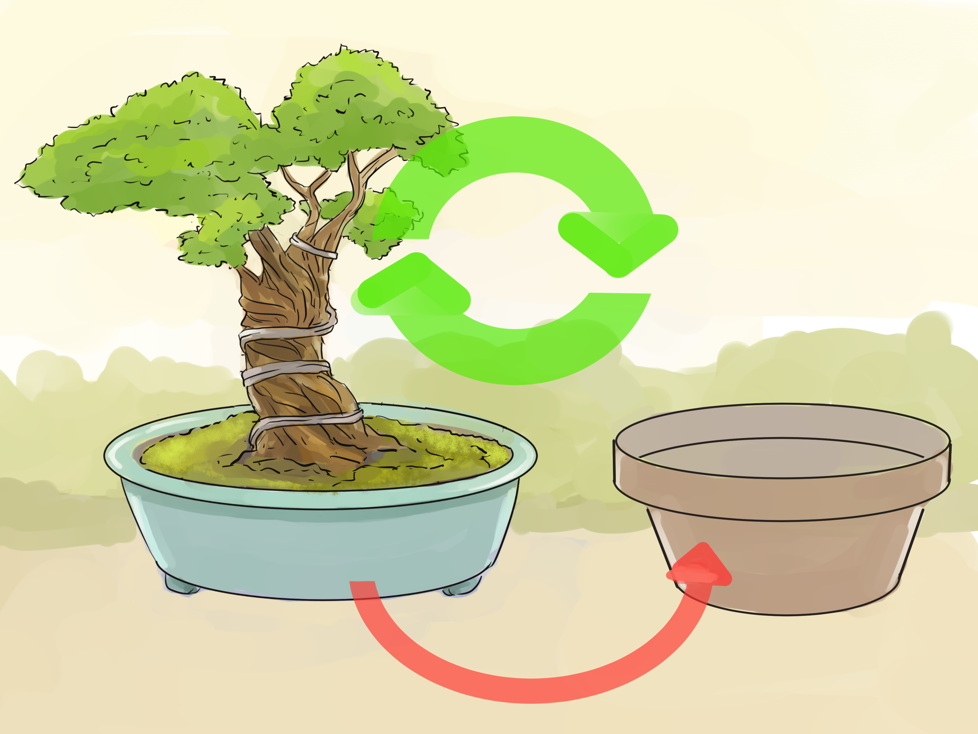 How To Transplant A Bonsai 12 Steps With Pictures Wikihow - Trasplantar Bonsai