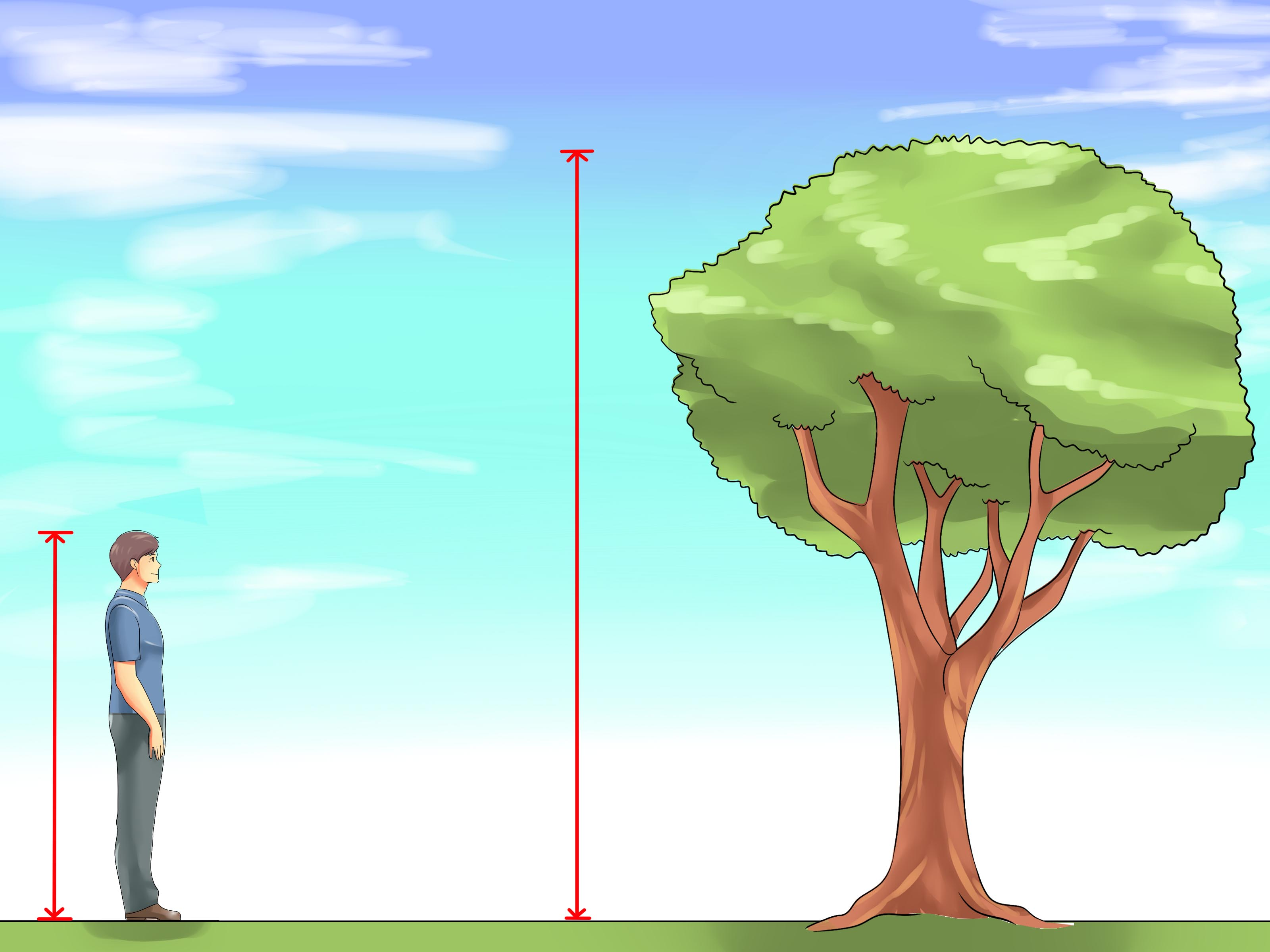 5 5 In Meters 4 Ways To Measure The Height Of A Tree Wikihow