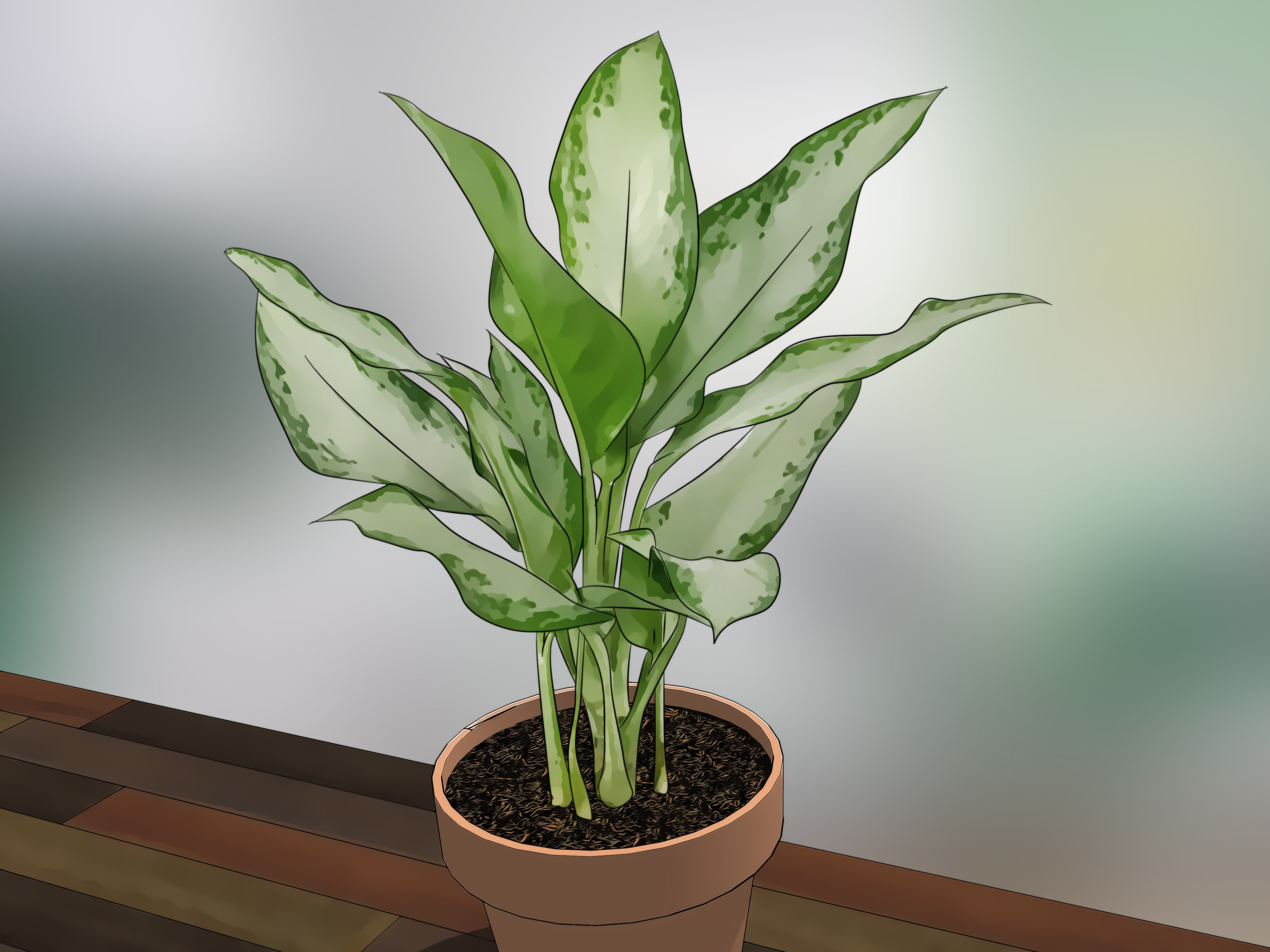 Pictures Of Flowering House Plants How To Care For Indoor Plants 15 Steps With Pictures