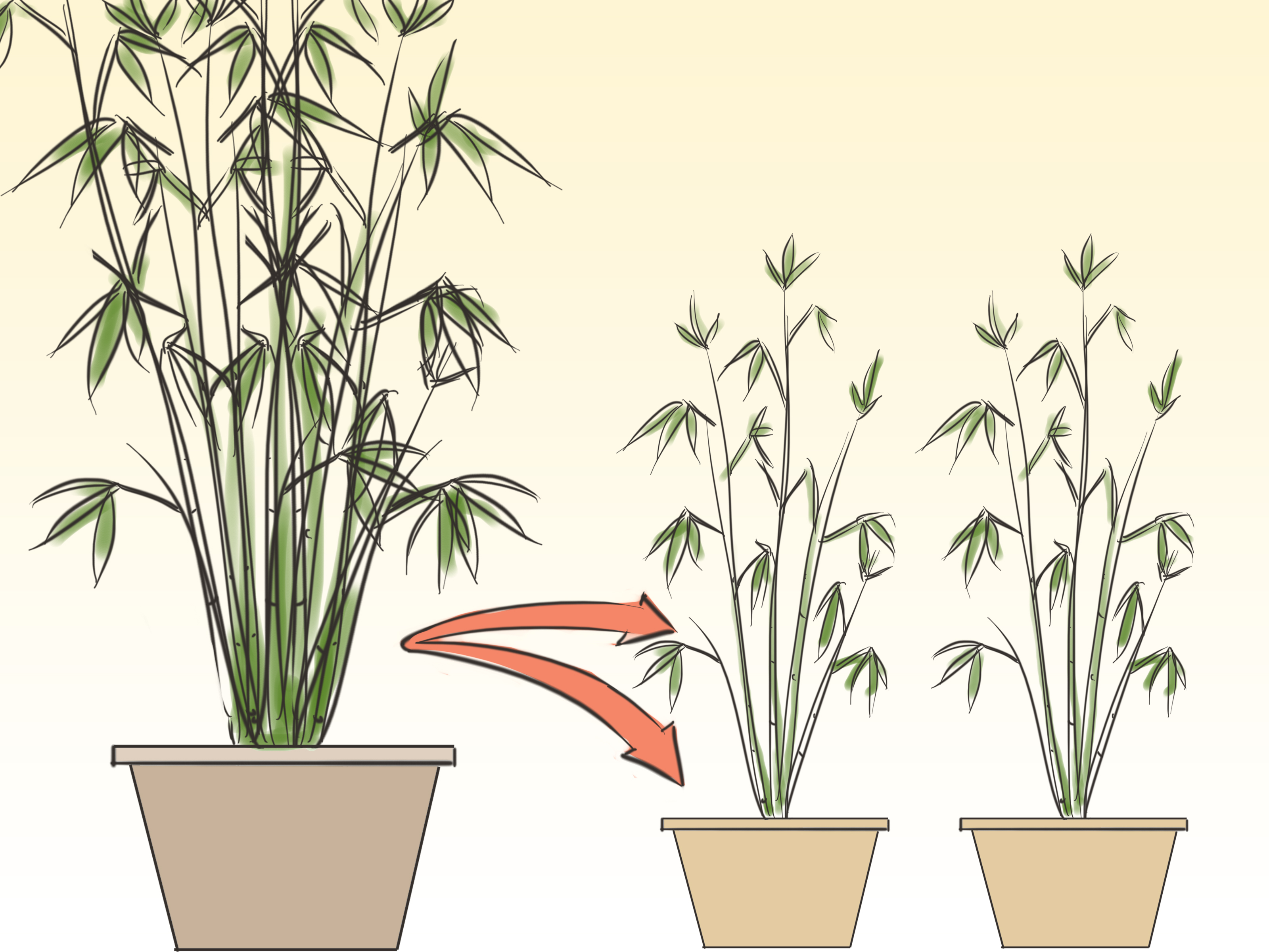 How To Plant Indoor Plants How To Care For An Indoor Bamboo Plant 8 Steps Wikihow