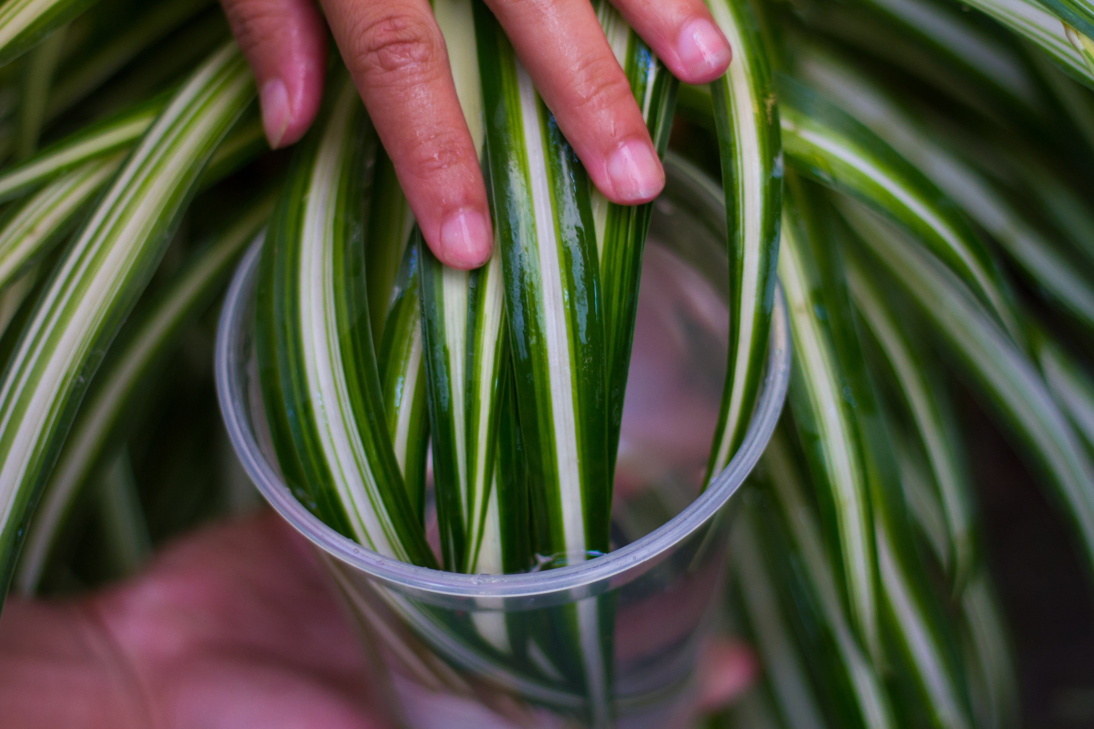 In House Plant How To Clean Your Indoor Houseplants 6 Steps With Pictures