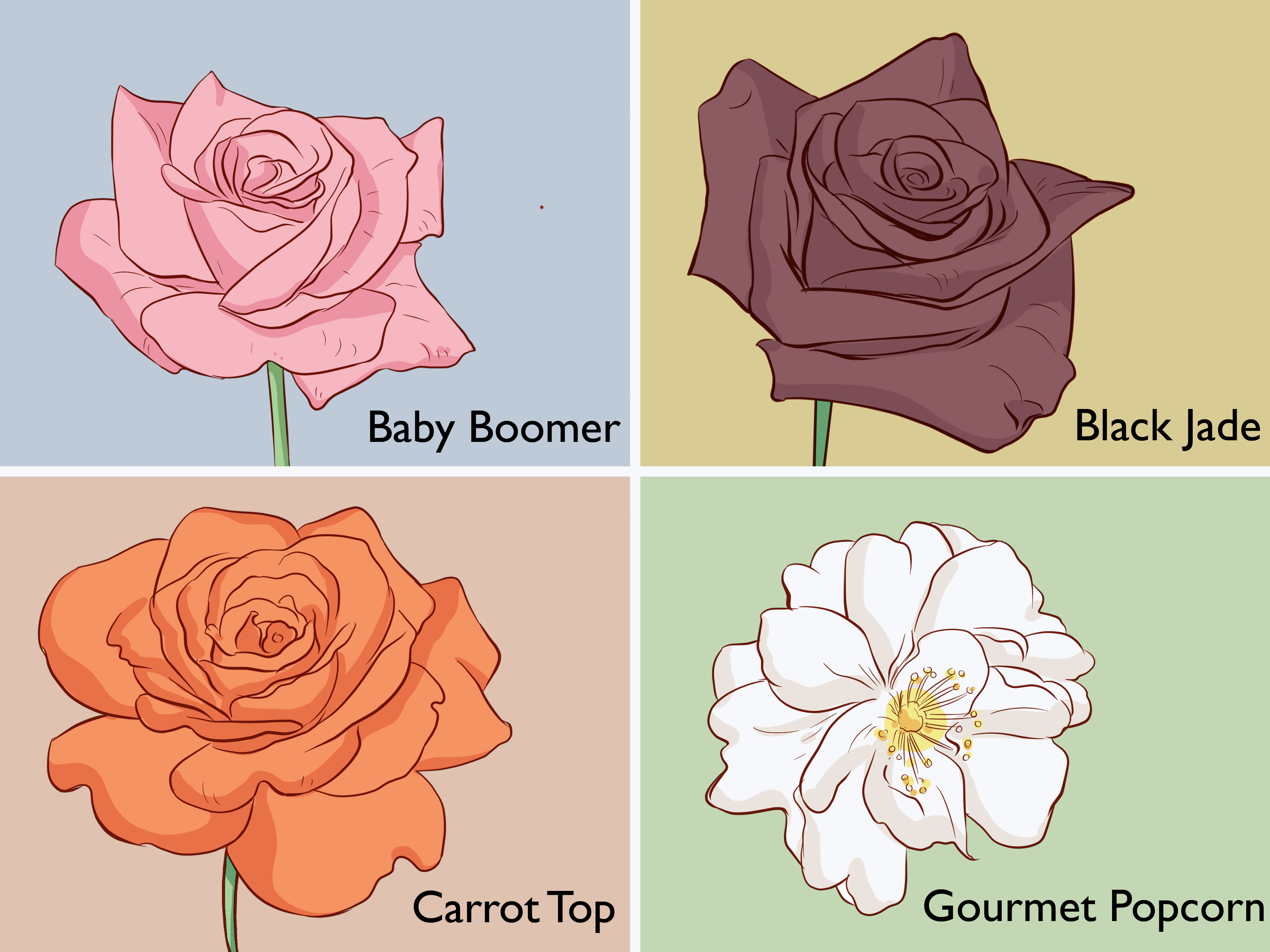 Alister Stella Grey Rose 3 Ways To Buy Rose Bushes Wikihow