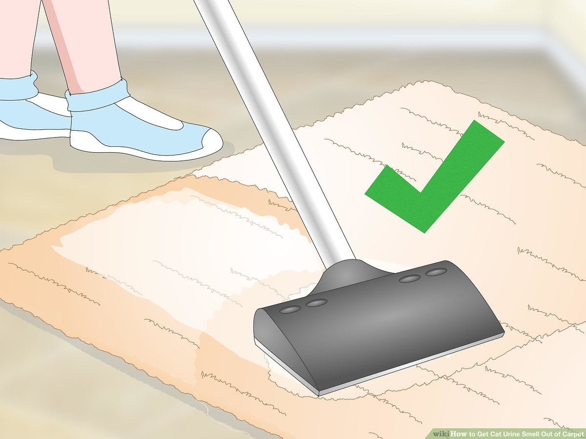 How To Get Urine Smell Out Of Clothes How To Get Cat Urine Smell Out Of Carpet 9 Steps With Pictures