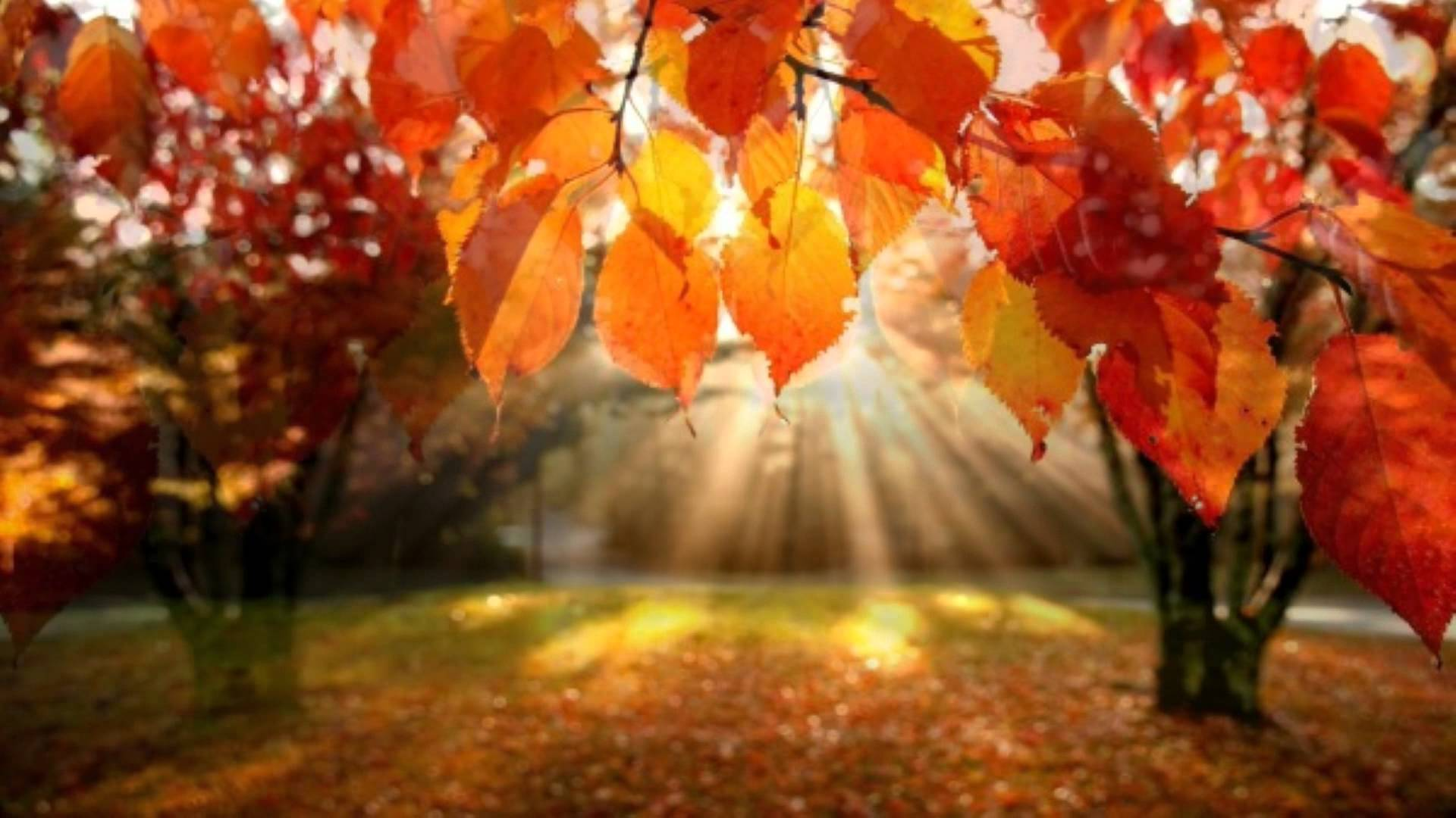 Falling Leaves Hd Live Wallpaper Fall Events 2017