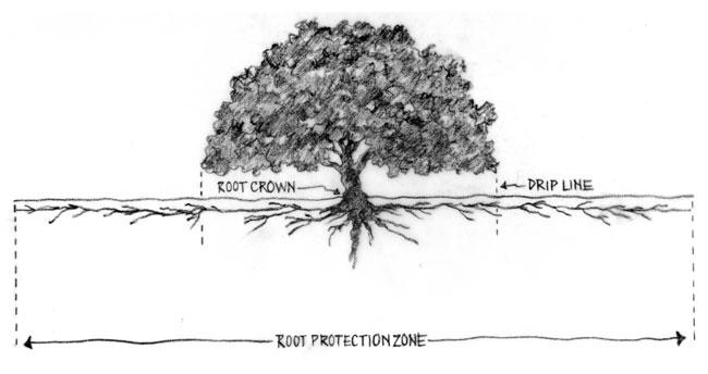 the alamo diagram texas pinterest