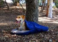 Backpacking Dog Bed: Tips on How to Choose One