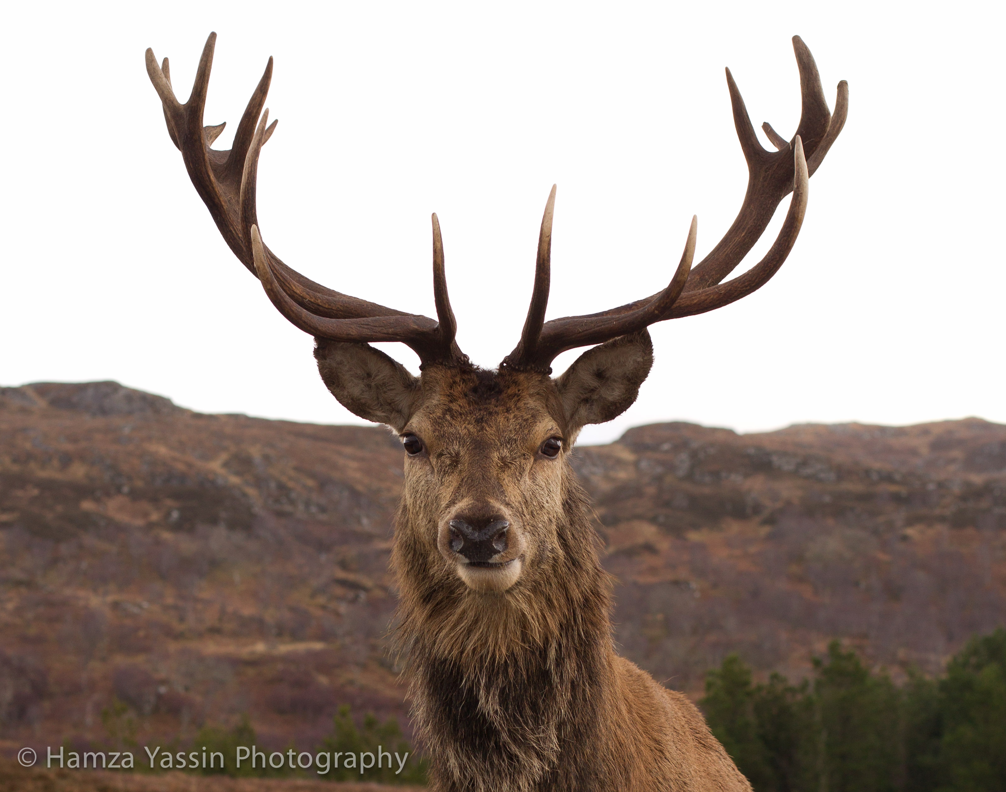 Hirsch Foto Wildlife Tours On Ardnamurchan West Coast Scotland