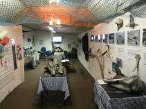 Sea Synergy interior resize