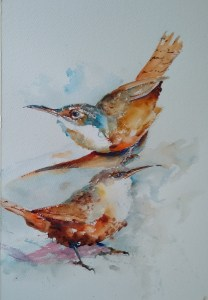 Canyon Wrens, w/c, 11″ x 9″, $150 (13″ x 16″ framed)  Matted Print 14″ x 11″ $25  Note Cards 5″ x 7″ $4