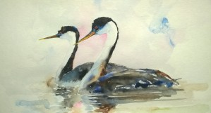 Western Grebes, w/c, 9″ x 12″, $150 (14″ x 18″ framed)  Matted Print 11″ x 14″ $25  Note Cards 5″ x 7″ $4