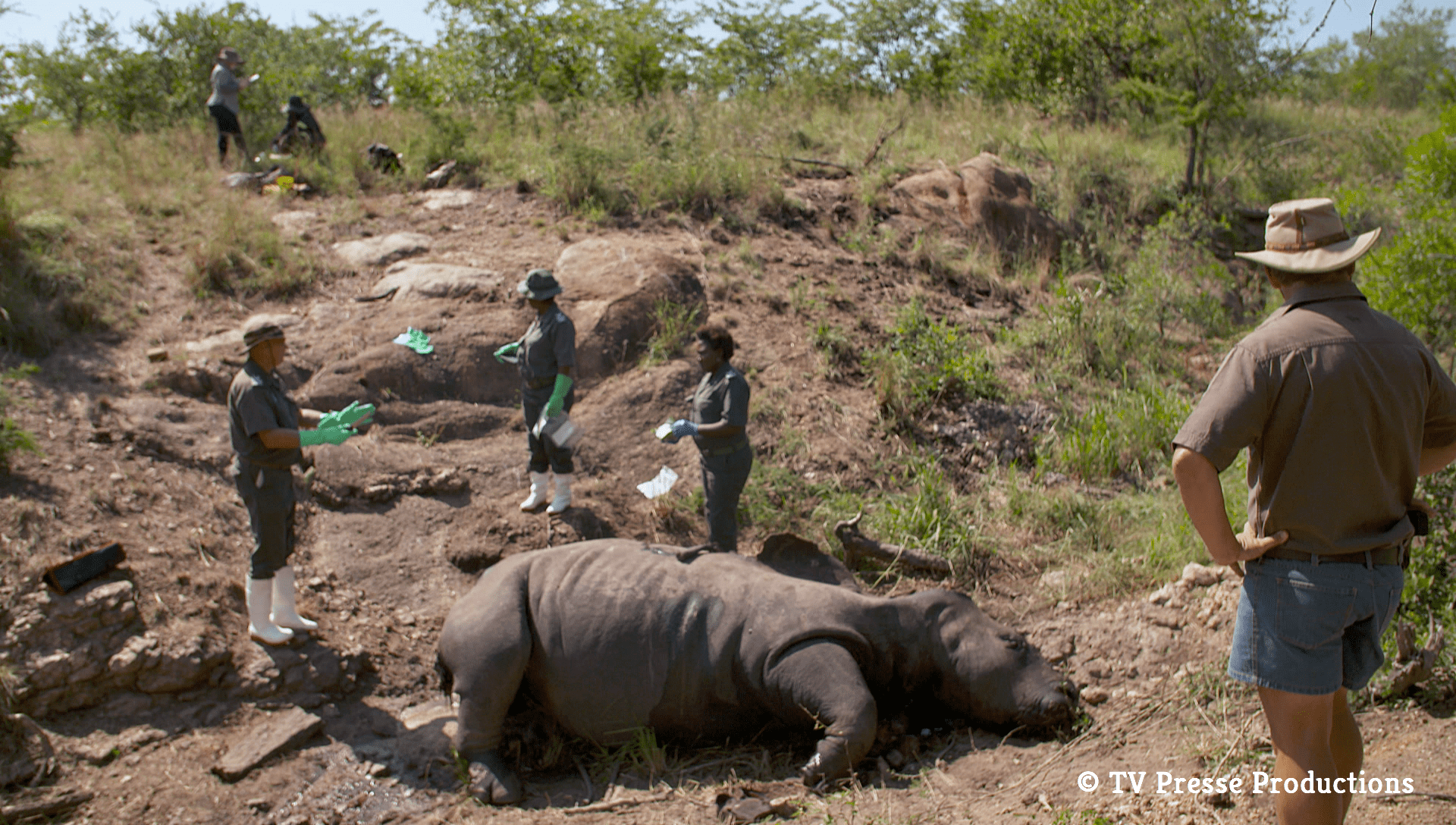Arte France Productions Watch Rhino Dollars Online At Arte Tv Wildlife Justice Commission
