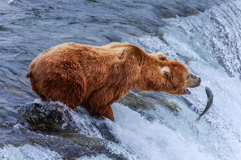 largest bear species in the world