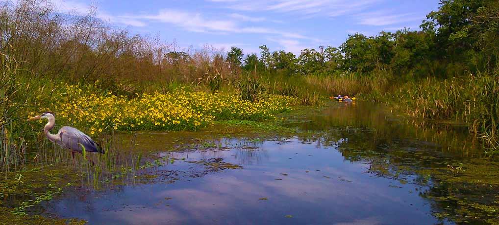 Delta Wildlife Kayak Eco Tour