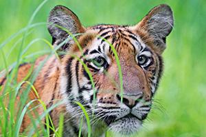 tadoba wildlife safari tours india