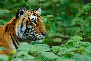 tiger tours and safari india