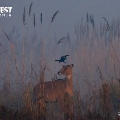 okhla-bird-sanctuary