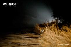 tiger photopgraphy in night at bandhavgarh national park