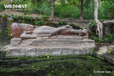 vishnu sheshaiya at bandhavgarh national park