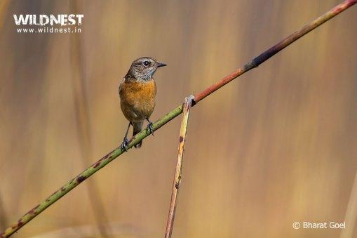 bird photography at dudhwa national park