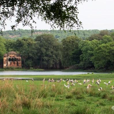 raj bagh palace at ranthambore national park