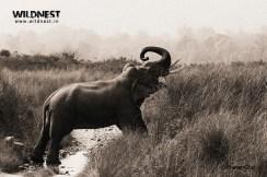 Elephant at Corbett Tiger Reserve