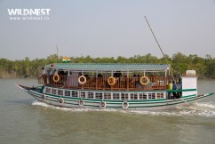Boat Ride at Sundarbans National Park