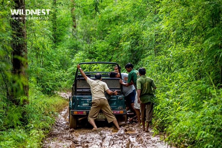 Tadoba Trip Report - Tadoba Andhari Tiger Reserve