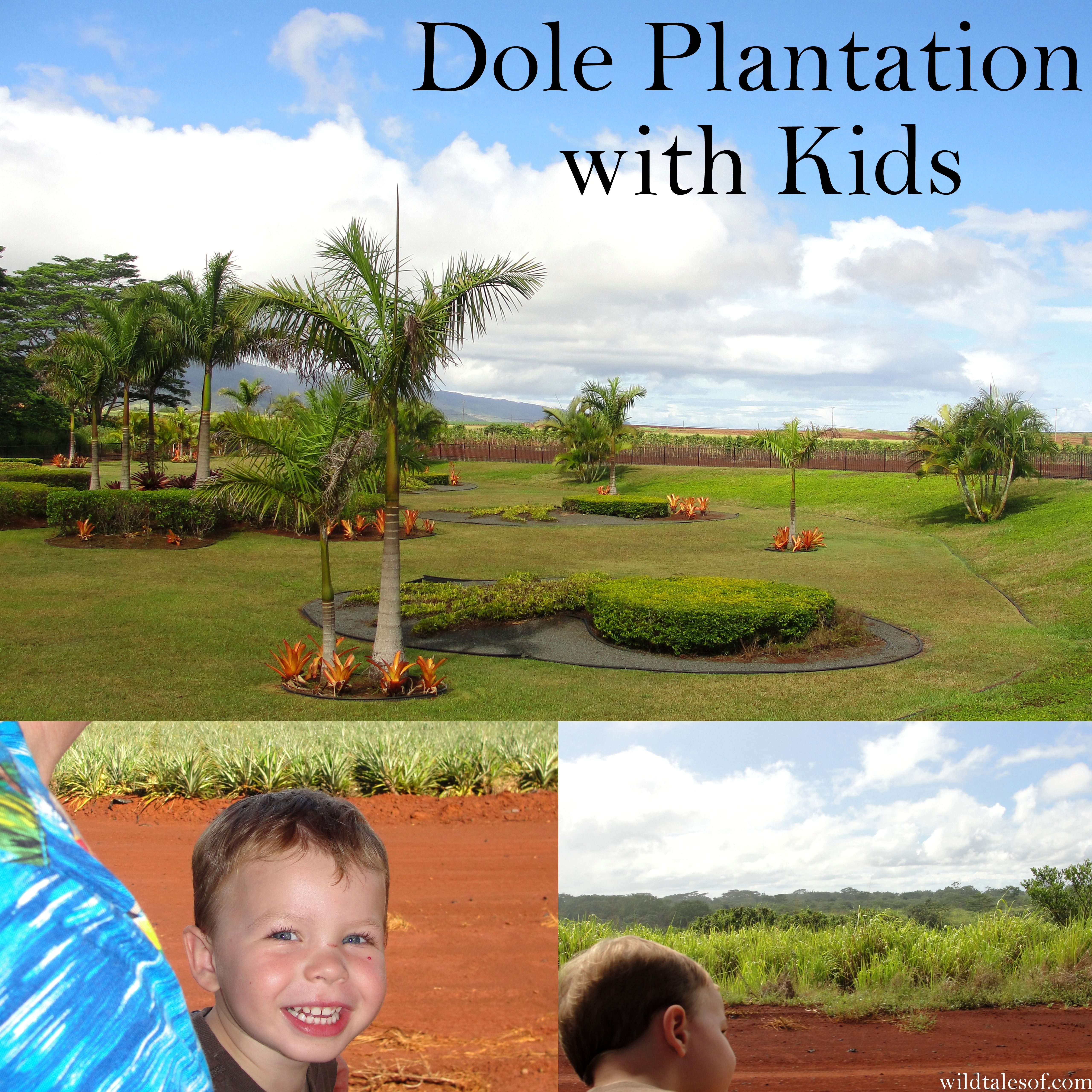 Feeding The Pineapple Obsession Oahu S Dole Plantation With Kids Wildtalesof Com