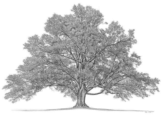 Family Tree \u2013 Pastor Mark Robinson