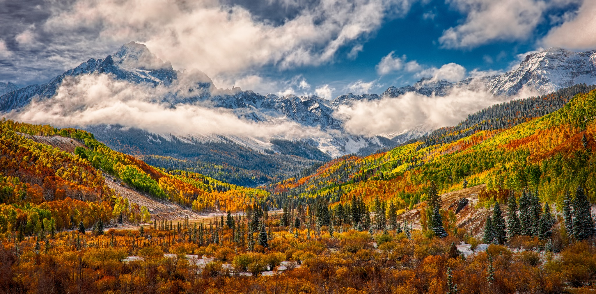 Fall Birch Tree Wallpaper Aspens And Oak Display Blazing Autumn Colors In Colorado