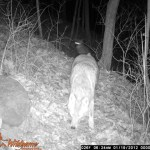 The Animals of Willow Haven Outdoor: TRAIL CAMERA PHOTOS