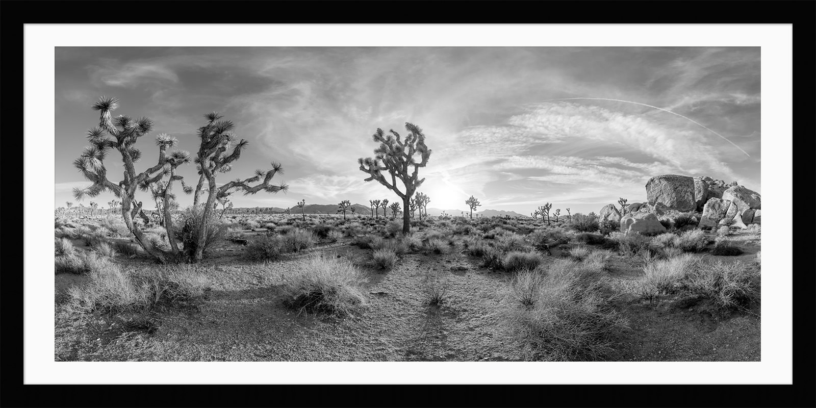 Large Black And White Posters Joshua Tree Black And White Landscape Framed Unframed