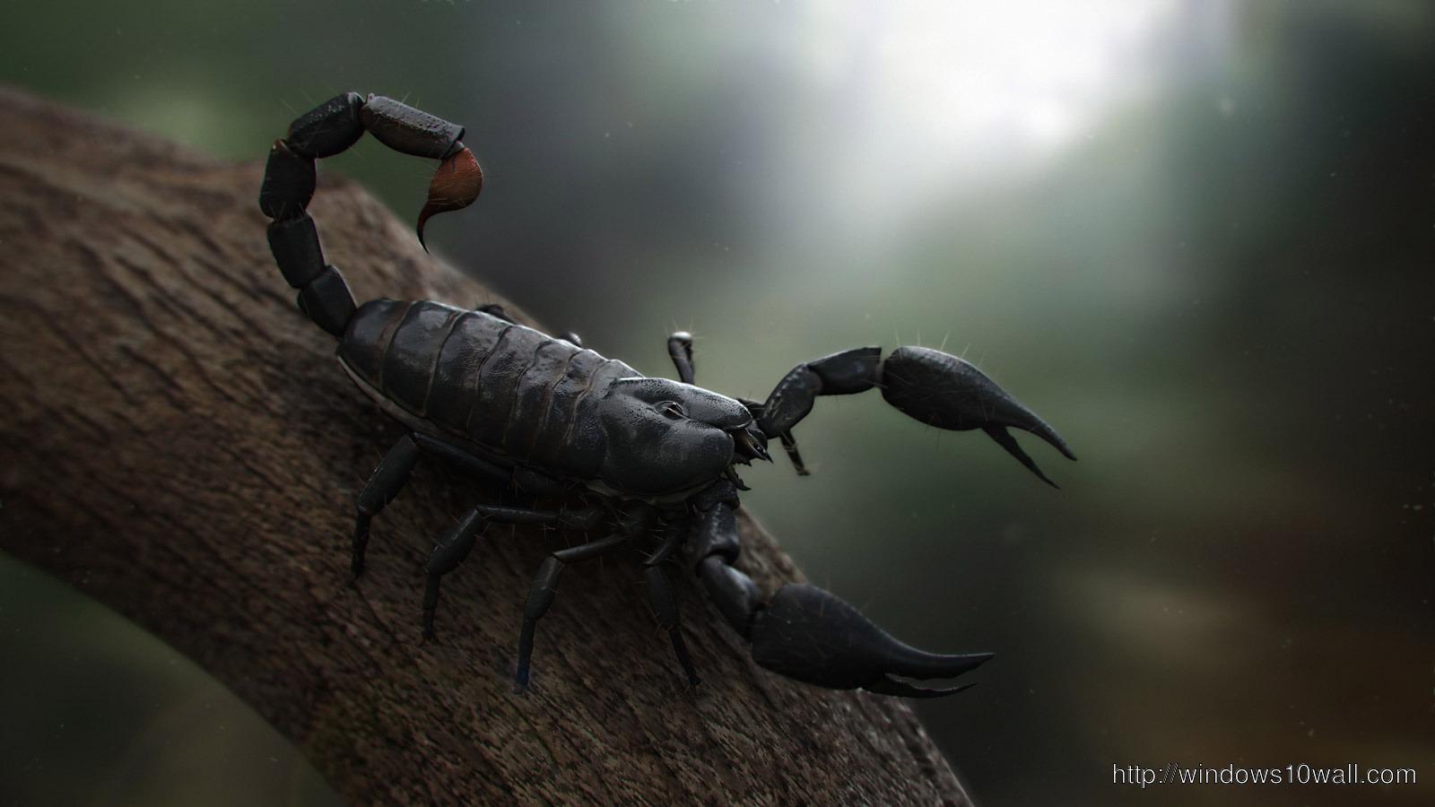 Naruto Quotes Wallpaper Hd Black Scorpion Hd Desktop Widescreen Download Now