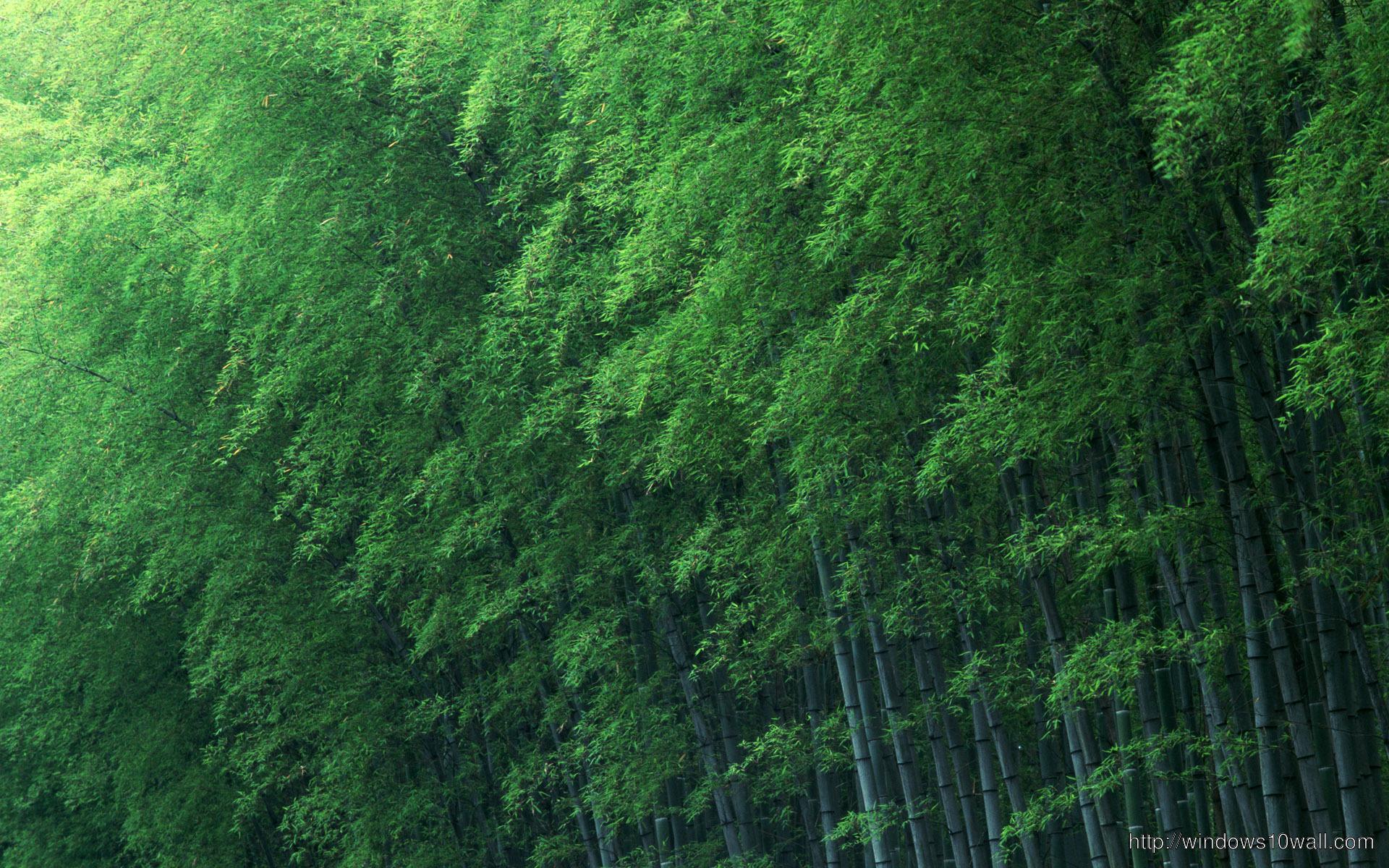 Eminem Wallpaper Iphone 5 Bamboo Forest Green Wallpaper Windows 10 Wallpapers