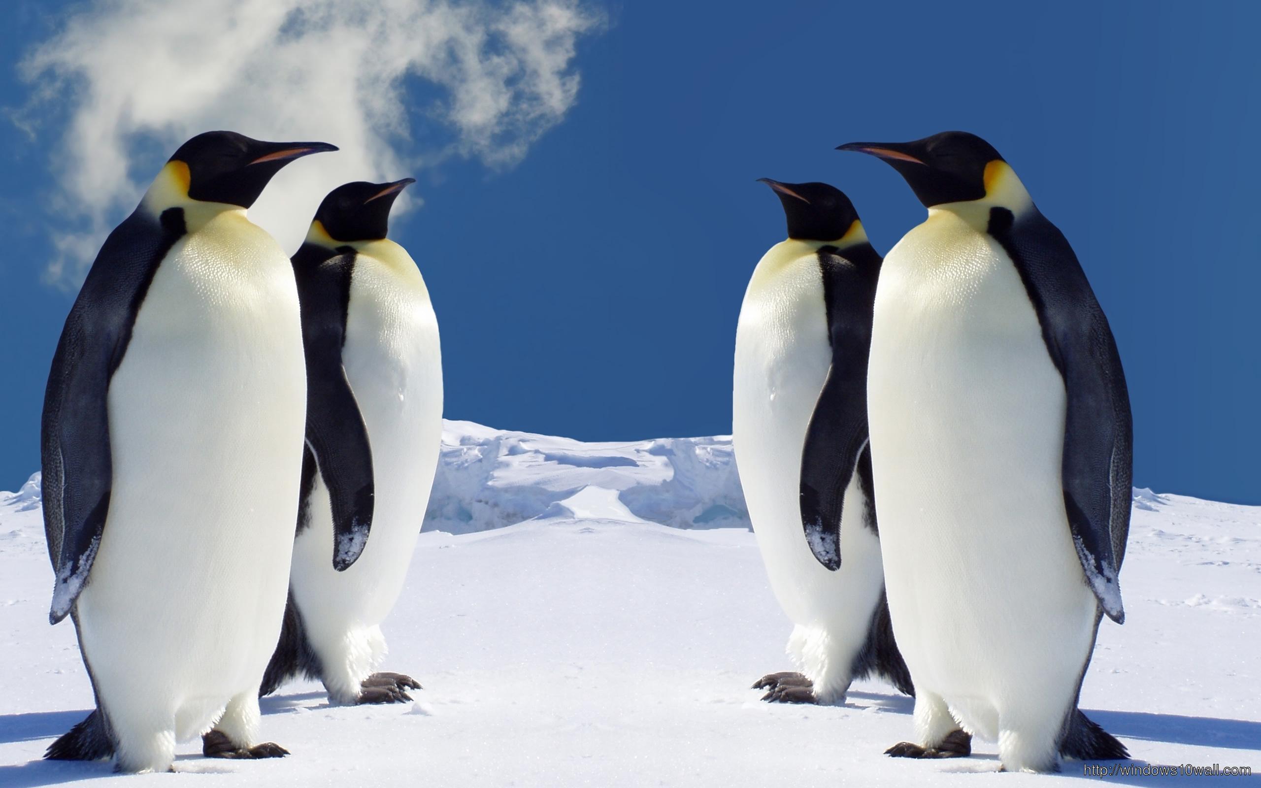Spongebob Quotes Iphone Wallpaper Cute Penguins Picture Windows 10 Wallpapers