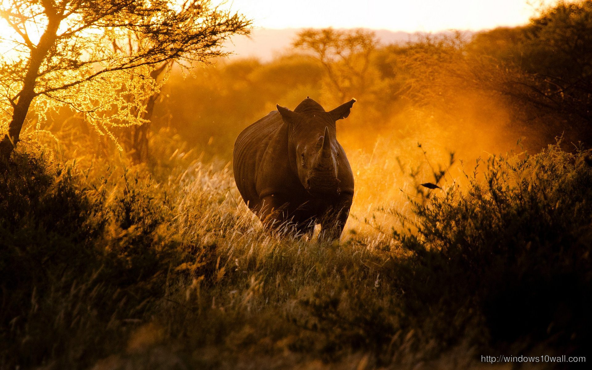 Boy Girl Love Wallpapers Mobile African Rhino Background Wallpaper Windows 10 Wallpapers